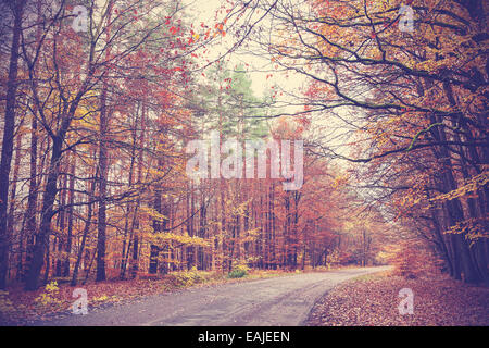 Retro filtered picture of a road in autumnal forest. - Stock Photo