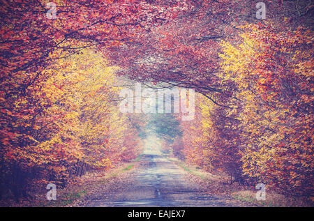 Retro vintage filtered picture of an autumnal forest. - Stock Photo
