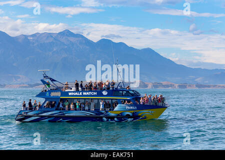 Whale watch boat in front of Kaikoura and the Kaikoura Range with Mt. Saunders, 2146m, Kaikoura, Canterbury Region, - Stock Photo