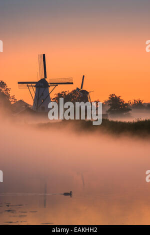 Morning glory in the little village of Ten Boer in the province of Groningen in the northern part of the Netherlands - Stock Photo