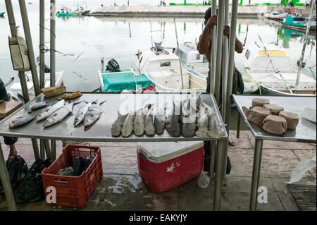 Fresh fish including a variety of shark for sale along the Melecon in Campeche, Mexico. - Stock Photo