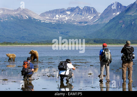 Group Of Photographers Photographing A Grizzly At Hallo Bay In The Kaguyak Area Of Katmai National Park, Alaska - Stock Photo