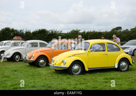Volkswagen Beetles at a classic car rally in Cornwall, UK - Stock Photo