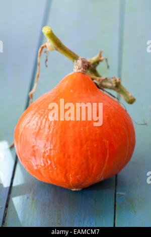 Red Kuri Squash - Stock Photo