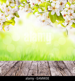 Spring apple blossoms above wooden planks. Blur green background with free space for text. - Stock Photo