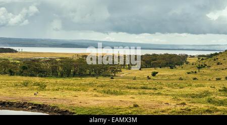 Lake Nukuru National Park in Kenya, Africa - Stock Photo
