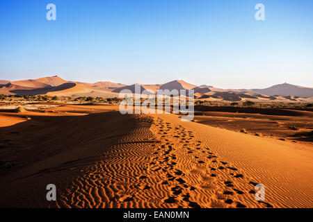 beautiful sunrise landscape of hidden Dead Vlei in Namib desert with blue sky, this is best place in Namibia - Stock Photo