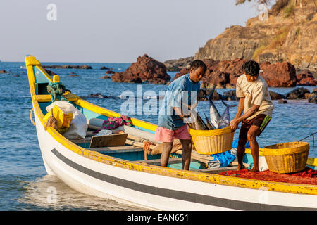 Fishermen Unloading The Day's Catch, Baga Beach, Goa, India - Stock Photo
