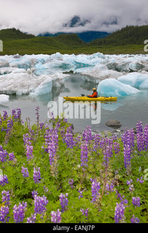 Kayaking,Iceberg,Alaska,Lupin,Columbia Glacier - Stock Photo