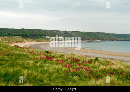 Sandy beach and wide bay with emerald grass and red Valerian wildflowers on low dunes near village of Port Eynon, - Stock Photo