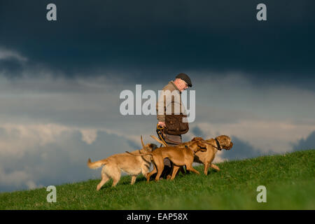 A man walking his dogs, all of them Hungarian Vizslas, on the South Downs, near Brighton, East Sussex. - Stock Photo
