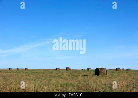 rolled hay bales in rural prairie grassland open fields bengough Saskatchewan Canada - Stock Photo