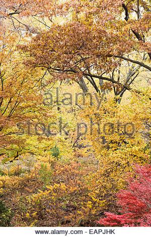 Oak Savanna Forest in High Park in autumn in Toronto Ontario Canada - Stock Photo