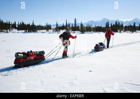 Cross Country Skiers Pull Gear In Sleds Across A Clearing In Denali National Park Near Wonder Lake Alaska - Stock Photo