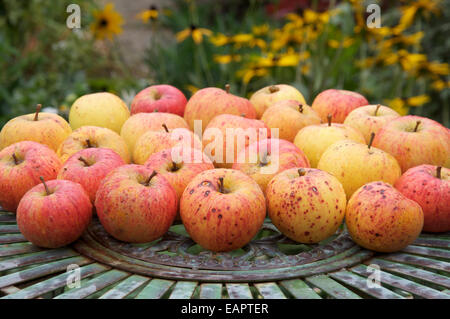 """Natural, organic, tasty. Ripe eating apples, the sweet delicious fruit of the Apple tree """"Malus domestica"""", laid - Stock Photo"""