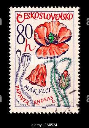 Postage stamp from Czechoslovakia depicting common poppies (Papaver rhoeas) - Stock Photo