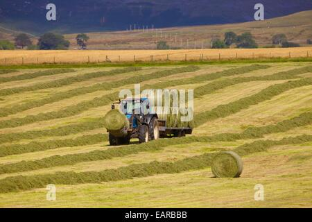 Tractor and trailer transporting hay bails. Eden Valley, Cumbria, England, UK. - Stock Photo