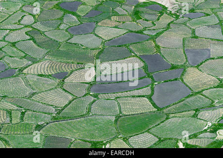 Aerial view, small fields, Spiti valley, Himachal Pradesh, India - Stock Photo