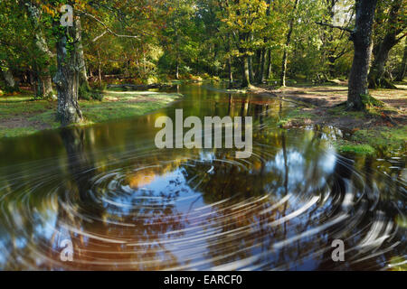 Ober Water. New Forest National Park. Hampshire. England. UK. - Stock Photo