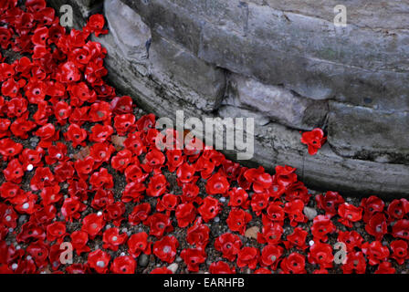 Some of the 888,246 ceramic poppies from the moat  at The Tower of London art installation. - Stock Photo