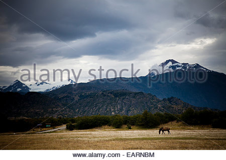 A lone horse grazes in a field with a mountain in the distance. - Stock Photo