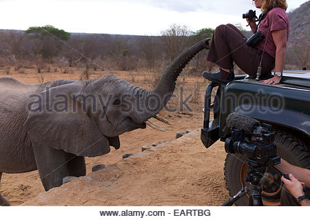 Tourists photograph orphan elephants in the Ithumba stockade. - Stock Photo