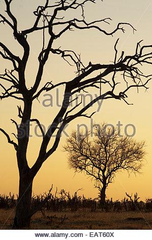 The Savuti Marsh Area in the Chobe National Park. - Stock Photo