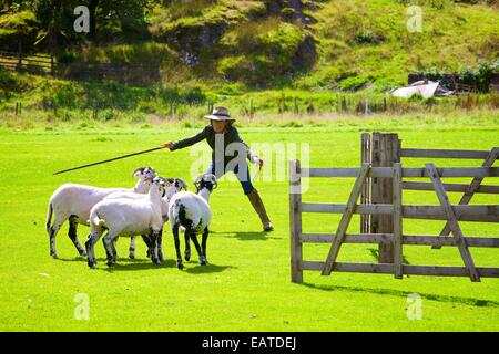 Katy Cropper at Patterdale Dog Day near Patterdale, The Lake District, Cumbria, England, UK. - Stock Photo