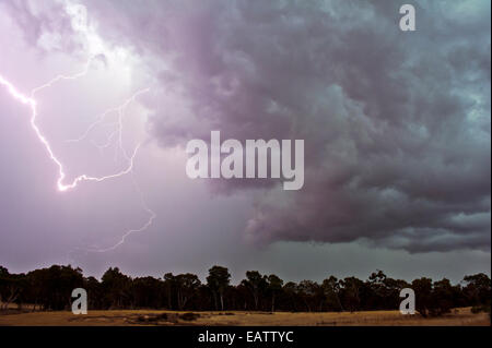 During thunder storms lightning can start fires in eucalyptus forests. - Stock Photo