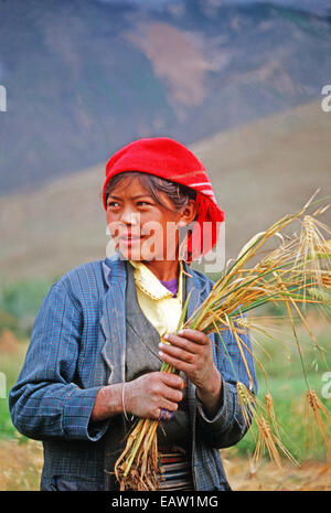 Young woman farm worker harvesting barley in Lhasa Valley of Tibet - Stock Photo