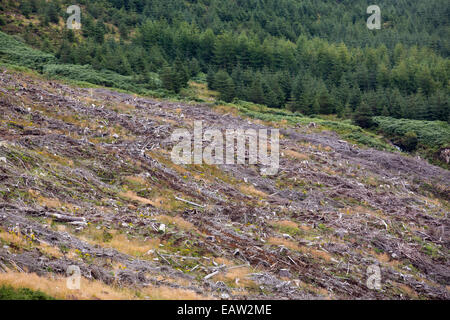 Clear felled conifer plantation trees alongside Loch Frisa on Mull, Scotland, UK. - Stock Photo