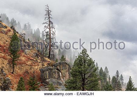 Lone dead tree on rocky hillside. - Stock Photo
