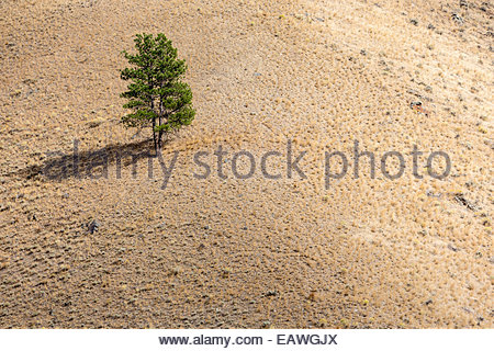 Single tree on hillside, late afternoon. - Stock Photo