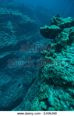 Divers explore the Ocean Blue Hole, an underwater cave system. - Stock Photo