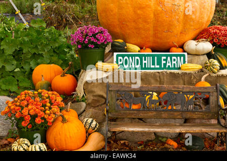 Pumpkins and squash for sale at the Pond Hill Farm along Highway 119 near Harbor Springs, Michigan, USA. - Stock Photo