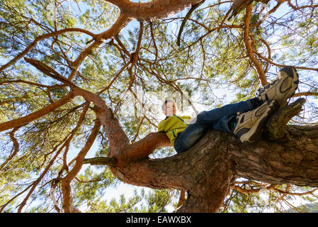 Young boy sitting in a high treetop - Stock Photo