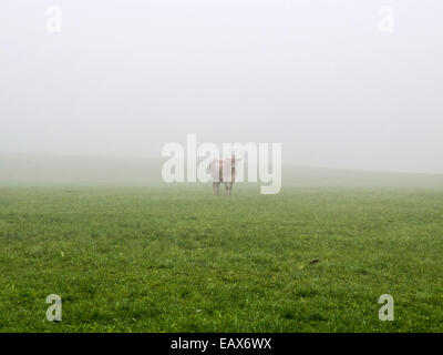 Cow in Fog - Stock Photo