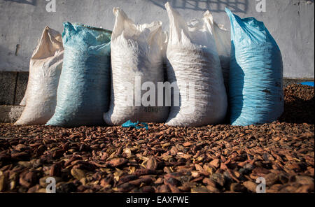 Part of the technology of producing plum brandy. - Stock Photo