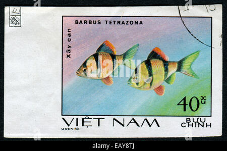 VIETNAM - CIRCA 1980: A stamp printed by Vietnam shows fish Barbus Tetrazona, stamp is from the series, circa 1980 - Stock Photo
