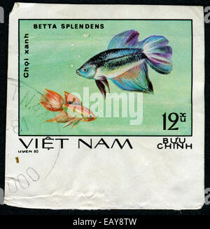 VIETNAM - CIRCA 1980: A stamp printed by Vietnam shows fish Betta splendens, stamp is from the series, circa 1980 - Stock Photo