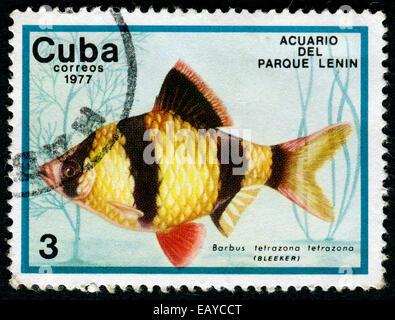 CUBA - CIRCA 1977: a stamp printed by Cuba show the fishes with the inscription Barbus tetrazona tetrazona, Lenin - Stock Photo