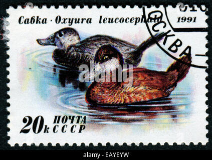 USSR - CIRCA 1991: A stamp printed in the USSR, shows Duck Conservation, circa 1991 - Stock Photo