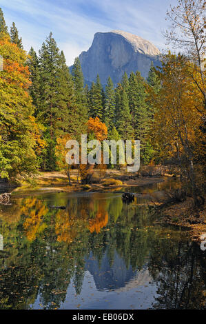 Pine trees and fall foliage surround Half Dome and reflect in the Merced River in Yosemite Valley National Park. - Stock Photo