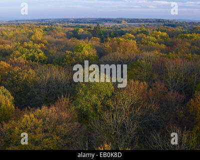 View over the Hainich from the treetop walkway, Germany - Stock Photo