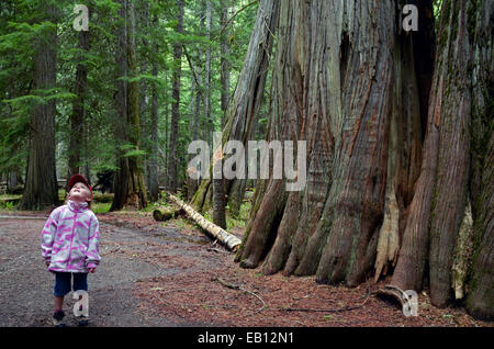 Young girl staring up at ancient western redcedar trees in the Ross Creek Cedar Grove, Kootenai National Forest, - Stock Photo