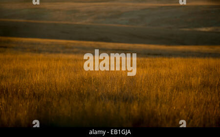 Early morning sunrise light shines on grassy moorland on Exmoor, UK - Stock Photo