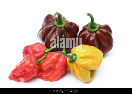 Super hot colorful chillies selection, food and drink photo of Chocolate Habanero, Mustard Habanero and Red Naga - Stock Photo