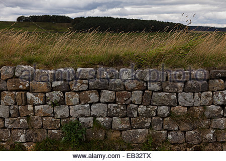 Detail of stones in a section of Hadrian's Wall near Northumberland - Stock Photo