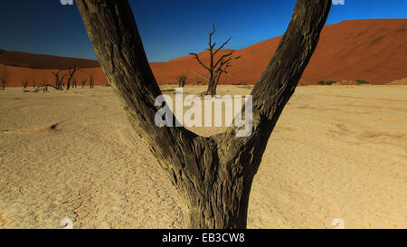Namibia, Naukluft National Park, View of Dead Vlei - Stock Photo