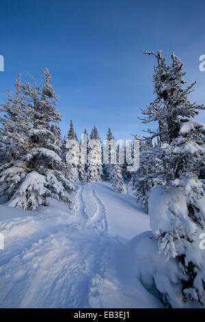 Tracks and trees on snowy hillside - Stock Photo